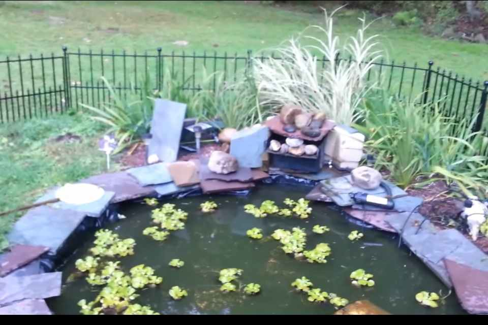 How to Turn A Pond into A Garden