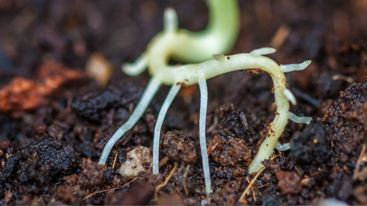 Beneficial Bacteria for Plants: See how they support Plants