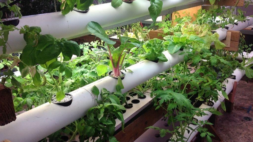 Unique hydroponics nutrition supply system.