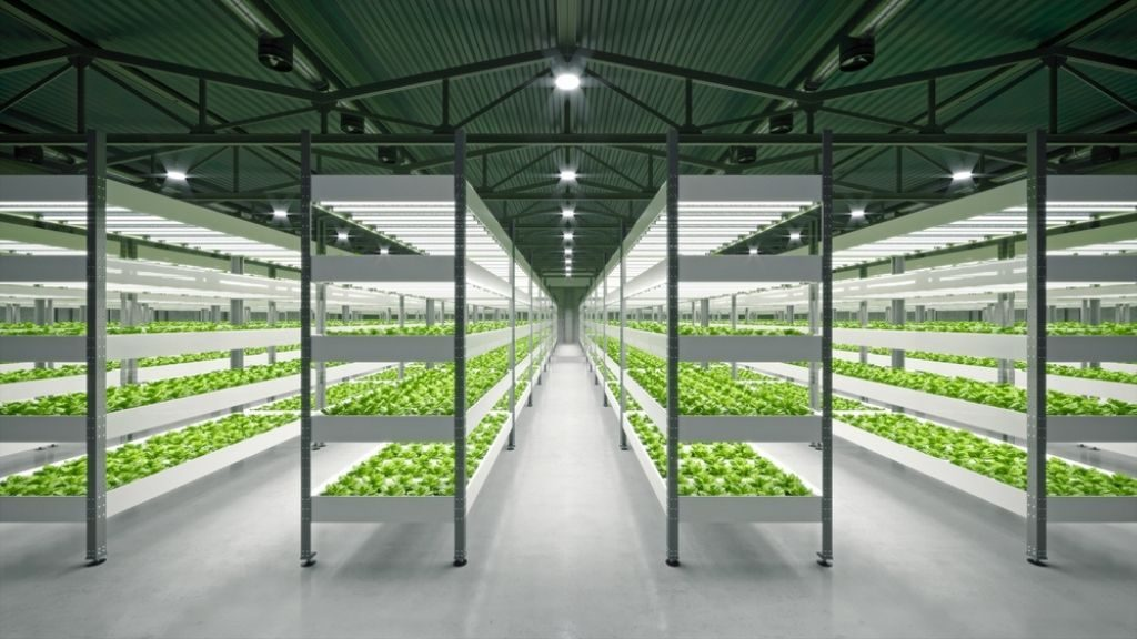 Plants growing in a controlled environment is costly.