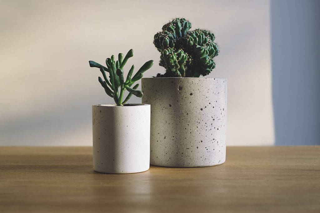 Plant Height to Pot Size Ratio
