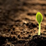 Organic pH Up and Down for Plant Growth: Tips for you!