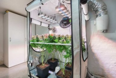 Best 4×4 Grow Tent Yield: A Detailed Guide