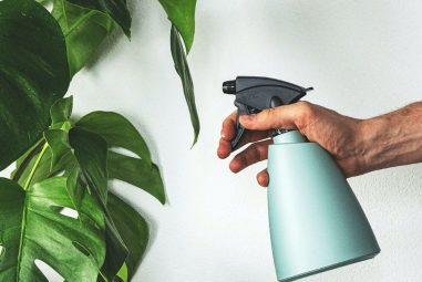 Protect Your Plants with Hydrogen Peroxide Foliar Spray. Read How