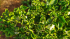 Leaves Curling Upwards: Check Out its Causes and Cure!