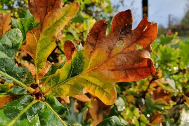 Plant Leaves Turning Brown and Curling up