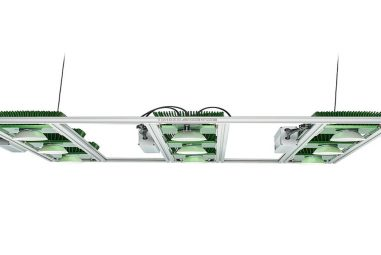 What is a timber LED grow light and How Does It Work?