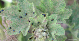 Tiny Black Bugs In Plant Soil- Everything You Need to Know