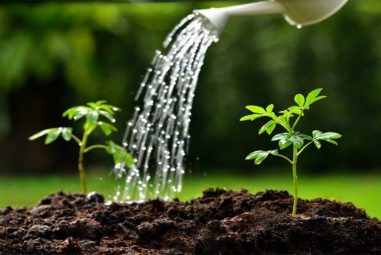 How Much Water Per Gallon Of Soil