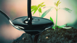 When Should I Add Molasses To My Plant