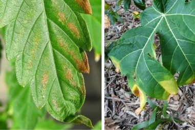 What is Nute Burn? Why it Happens and How You Can Fix it?