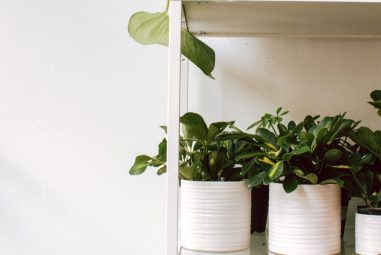 Understand Plant Height to Pot Size Ratio | Do Smart Gardening